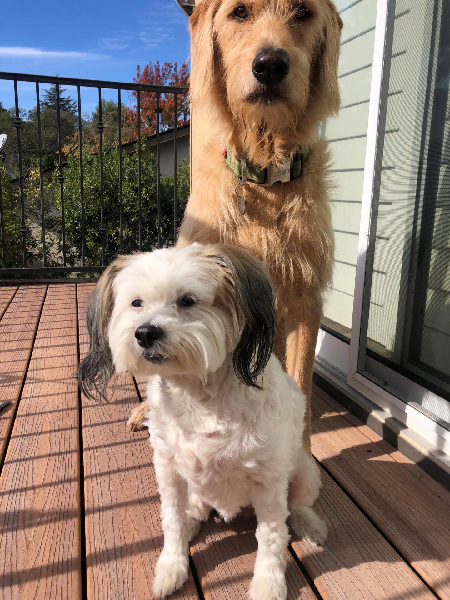 Coco and friend