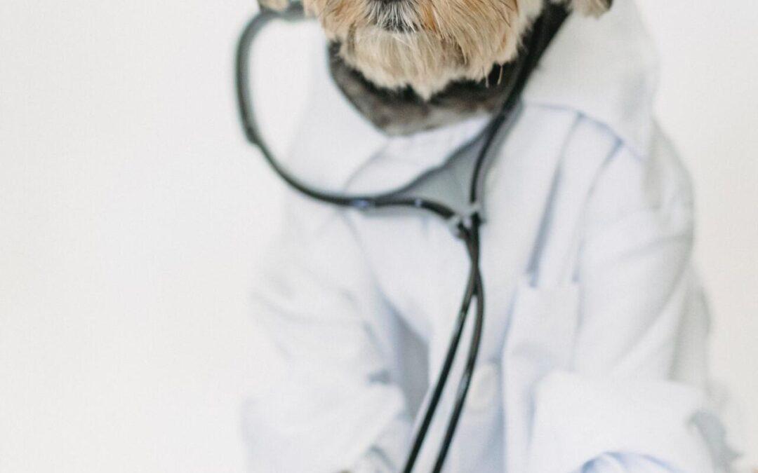 Pet Insurance:  Do I Really Need It?